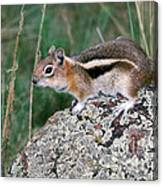 Golden Mantled Ground Squirrel Canvas Print