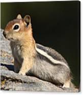 Golden-mantled Ground Squirrel Canvas Print