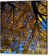 Golden Maple 8 Canvas Print