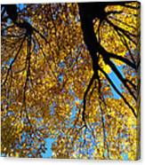 Golden Maple 9 Canvas Print