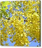 Golden Medallion Shower Tree Canvas Print