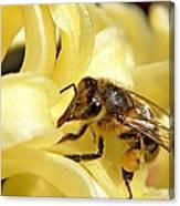 Golden Nectar  Canvas Print