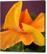 Golden Pansy Canvas Print