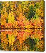 Golden Reflection Canvas Print
