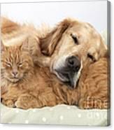 Golden Retriever And Orange Cat Canvas Print