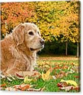 Golden Retriever Dog Autumn Day Canvas Print