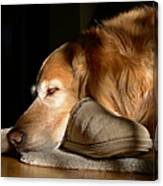 Golden Retriever Dog With Master's Slipper Canvas Print