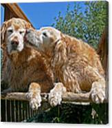 Golden Retriever Dogs The Kiss Canvas Print