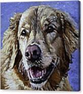 Golden Retriever - Molly Canvas Print