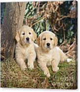 Golden Retriever Puppies In The Woods Canvas Print