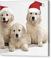 Golden Retriever Puppies With Christmas Canvas Print