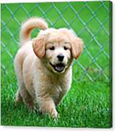 Golden Retriever Puppy Canvas Print