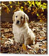 Golden Retriever Puppy Dog In Fallen Canvas Print