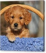 Golden Retriever Puppy In A Basket Canvas Print
