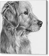 Golden Retriever Puppy In Charcoal One Canvas Print