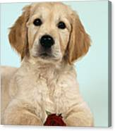 Golden Retriever Puppy With Rose Canvas Print