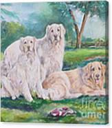 Golden Retriever Trio Canvas Print