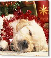 Golden Retriever Under Christmas Tree Canvas Print