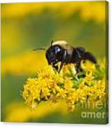 Golden Rod And Bumblebee Canvas Print