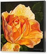Golden Rose Blossom Canvas Print