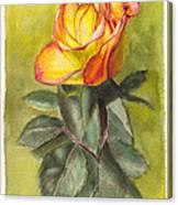 Golden Rose Canvas Print