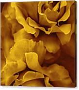 Golden Yellow Roses Canvas Print