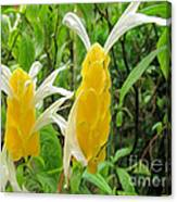 Golden Shrimp Plant Or Lollipop Plant Canvas Print