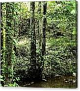 Golden Silence In The Forest Canvas Print