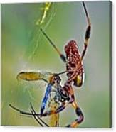 Golden Silk Orb With Blue Dragonfly Canvas Print
