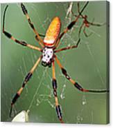 Golden Silk Spider Capturing A Stinkbug Canvas Print