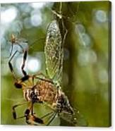 Golden Silk Spider Canvas Print