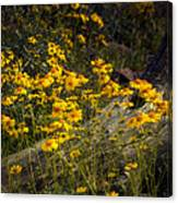 Golden Spring Flowers  Canvas Print