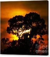 Golden Sunset... Canvas Print