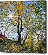 Golden Tree Canvas Print