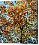 Golden Tree Lined Sky Canvas Print