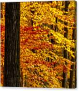 Golden Trees Glowing Canvas Print