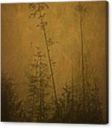 Golden Trees In Winter Canvas Print