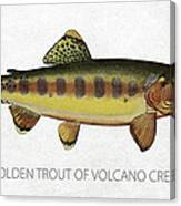 Golden Trout Of Volcano Creek Canvas Print
