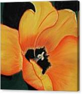 Golden Tulip Canvas Print