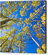 Golden View Looking Up Canvas Print