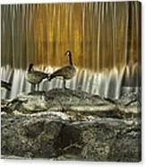 Golden Waterfalls Canvas Print