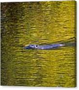 Golden Waters Canvas Print