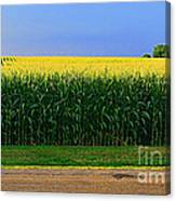 Golden Waves Of Grain Canvas Print
