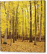 Golden Woods Canvas Print