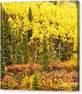 Golden Yellow Fall Boreal Forest In Yukon Canada Canvas Print