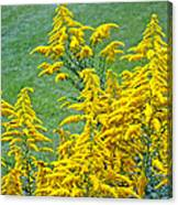 Goldenrod Flowers Canvas Print