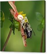 Goldenrod Spider Canvas Print