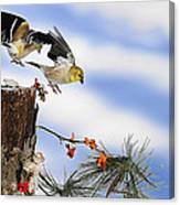 Goldfiches Flying Over Lichen Stump Canvas Print