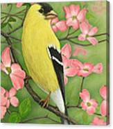 Goldfinch And Dogwood Canvas Print