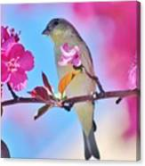 Goldfinch Behind Pink Blossoms 031015aaa Canvas Print